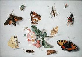 Butterflies, moths and other insects with a sprig of apple blossom