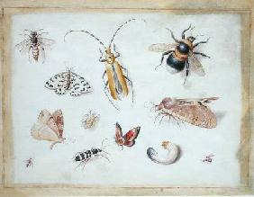 A Study of Butterflies and other Insects