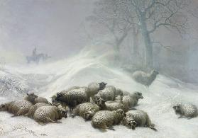 Sheep in a Snowstorm