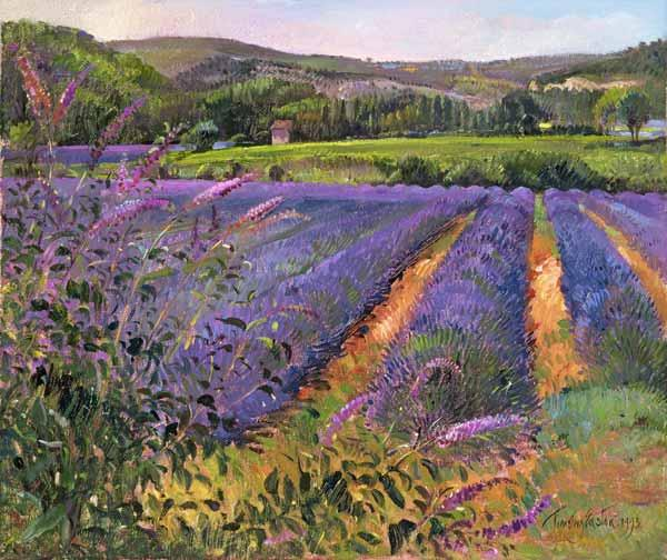 Buddleia and Lavender Field, Montclus, 1993 (oil on canvas)