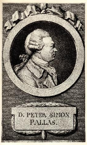 Portrait of the zoologist and botanist Peter Simon Pallas (1741-1811)