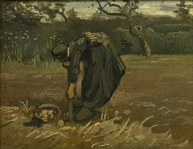Peasant woman, harvesting potatoes