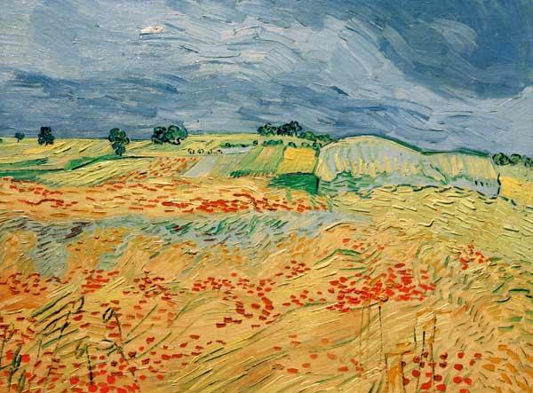 Van Gogh Fields With Blooming Poppies Vincent Van Gogh As Art