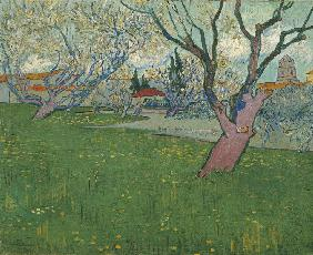 Orchards in blossom, view of Arles