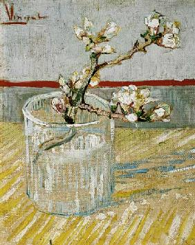 Blossoming Almond Branch in a Glass