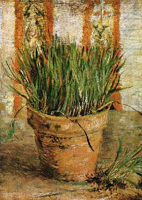 Flowerpot with chives