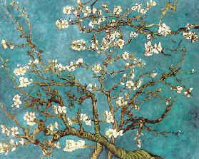 Almond Blossoms (copy)