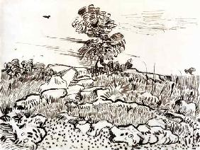Rocky Ground at Montmajour, 1888-89 (pen, reed pen &
