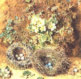 Primroses and Birds' Nests
