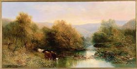 Cattle on the Dart in Autumn